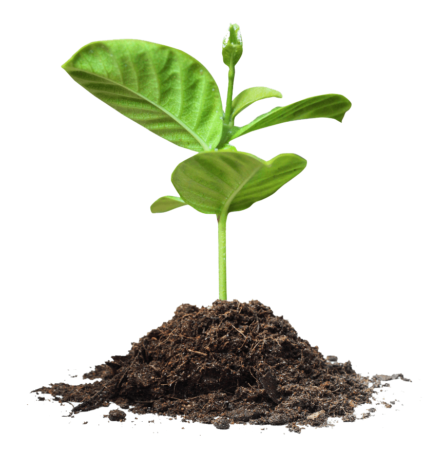 Plant growth png images galleries with a bite - Successful flower growing business ...